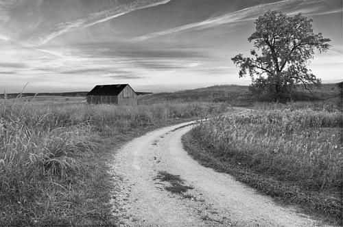 Prairie Dawn, Nachusa Grasslands Preserve, Illinois