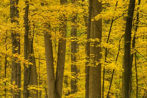 Golden Forest, McCormick's Creek State Park, Indiana