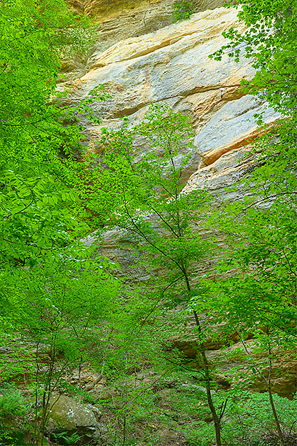 Bluff & Trees, Conkle's Hollow State Nature Preserve, Ohio