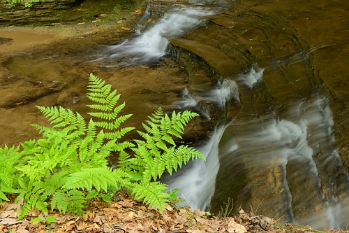 Ferns & Cascades, Old Man's Cave Area, Hocking Hills State Park, Ohio