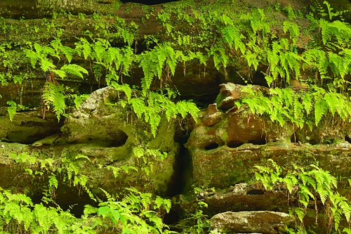 """Hanging Gardens,"" Old Man's Cave Area, Hocking Hills State Park, Ohio"