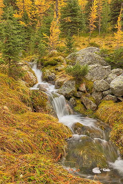 Opabin Cascade, East Opabin Trail, Opabin Plateau, Yoho National Park, British Columbia