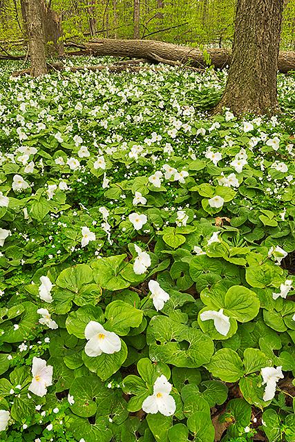 Bendix Woods County Park, St. Joseph County, Indiana
