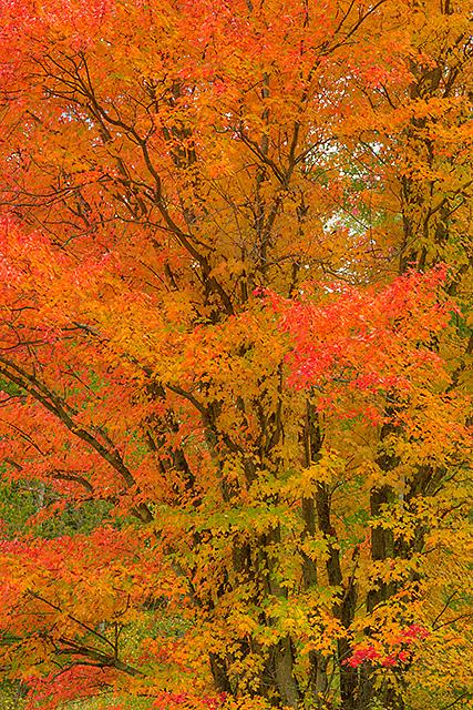 Autumn Intimate, Essex County, Vermont